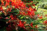 Garten der Orchideen, Elsass, F