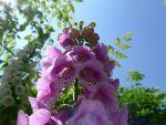 Garten von Pierette, Elsass, F