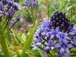 Hambledon House Garden, Hampshire, GB